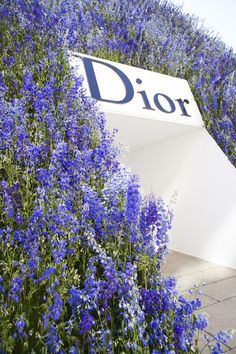 Take me to a field of blue!         Dior show ss16 in paris