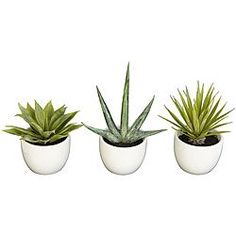 Add Southwestern elegance to your home with this collection of agave plants. These agave plants include three different varieties that can beautifully complement your home.