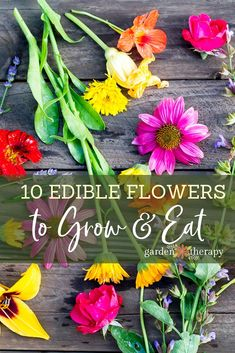 The Dirt on Edible Flowers (and the Top Ten You Must Try!) The Dirt on Edible Flowers (and the Top Ten You Must Try!),Arka Bahce The Dirt on Edible Flowers (and the Top Ten You Must Try!) garden ideas vegetable vegetables gardening to start in january Edible Plants, Edible Garden, Edible Succulents, Exotic Flowers, Beautiful Flowers, List Of Edible Flowers, Best Edibles, Flower Pot Design, Flower Landscape