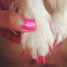 pink puppy paws - I have been tempted to do this to my dog but afraid she would eat the polish.