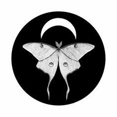 Illustration Moon Lunar Moth Ink drawing, moon wall art print, entomology artist print, black and . Lunar Moth Tattoo, Black Tattoos, Small Tattoos, Moth Drawing, Moon Illustration, Ink Drawings, Moon Art, Print Artist, Wall Art Prints