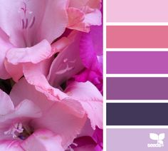 gladiola hues