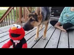 German Shepherd Puppy Afraid of Elmo | Summer Fun at the Lake Family Vlog