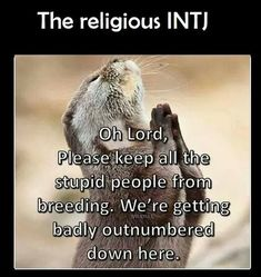 Oh Lord, please keep all the stupid people from breeding. We're getting badly outnumbered down here ISLAM sucks Intj Humor, Sarcastic Humor, Funny Quotes, Funny Memes, It's Funny, Funny Gifs, Stupid Quotes, That's Hilarious, Witty Quotes