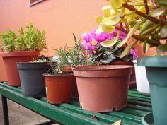 Flores y plantas aromáticas