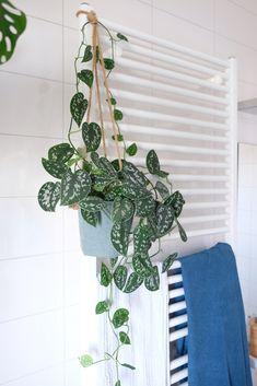 Planten op de badkamer. Groen sfeertje! - ZoSammieEnzo House Design, Home, Chic Living, Deco, Home Deco, Bathroom