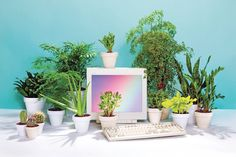 sleazeburger:  jacikessler:  Art direction: office plants you can't kill! With photo editor Alis Atwell, shot by Elizabeth Renstrom  Yay I l...