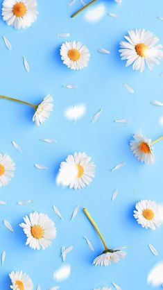 66 Ideas For Wall Paper Flores Margaritas Daisy Flowers Daisy Wallpaper, Flower Phone Wallpaper, Iphone Background Wallpaper, Blue Wallpapers, Pretty Wallpapers, Colorful Wallpaper, Aesthetic Iphone Wallpaper, Galaxy Wallpaper, Nature Wallpaper
