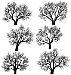 Silhouettes of trees without leaves vector by Vertyr - Image ...