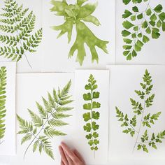 Another picture of the Ferns I painted a while back that are now featured in my Postcard Packet collaboration with @papress @chroniclebooks! Pre-order your set through the link in my bio.  Thank you @abeautifulmess for the Ferns feature yesterday🌿💚
