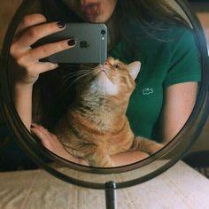 #wattpad #romance Hola xd Leela ahre Crazy Cat Lady, Crazy Cats, Animals And Pets, Cute Animals, Photo Chat, Photos Tumblr, Selfie Poses, Insta Photo Ideas, Tumblr Girls