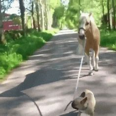 Keep Up Horse  (Click to view GIF Anime)