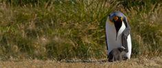 Parque Pingüino Rey, Tierra del Fuego