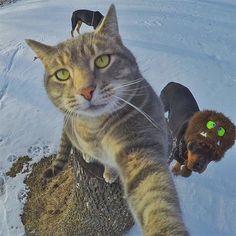 """∑:) Manny """"el gato fanático de las selfies"""""""