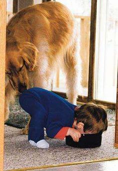"""I had one that did this! To quote my mom, """" Charlene, your son is in the dog food again"""""""