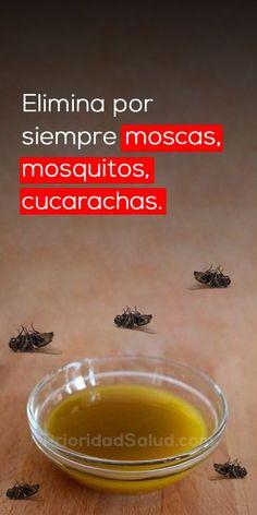 Elimina las moscas en la casa, las cucarachas y los mosquitos en solo 2 horas. Prueba esta solución natural, sin hacerle daños a tu salud.