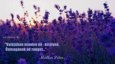 Müller Péter bölcsessége a nőkről. A kép forrása: Pozitív Nap Nap, Insomnia, Facebook, Quotes, Quotations, Quote, Shut Up Quotes