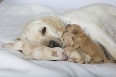 Timing of ovulation in canines: 3 take-away messages from our previous webinar