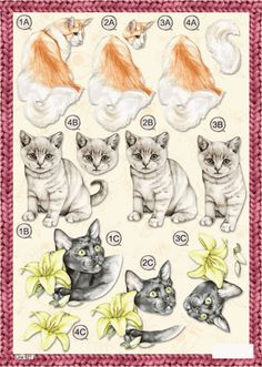 A4 3D step by step die cut decoupage - animals - pet cats #2