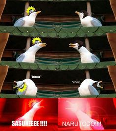 Inhaling Seagull: Image Gallery | Know Your Meme