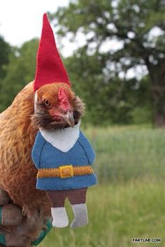 Halloween Costumes for chickens. Yes. LOL. Lynn better get to work, and the duck needs one too. Haha