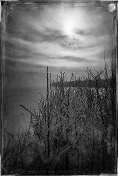 Botany In Winter 2 / Lucian Olteanu / Photographie, Numérique