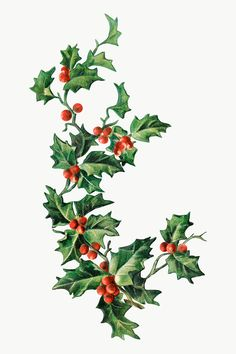 Christmas Leaves, Christmas Plants, Christmas Icons, Christmas Art, Vintage Christmas, Christmas Decorations, Xmas, Holly Leaf, Country Christmas