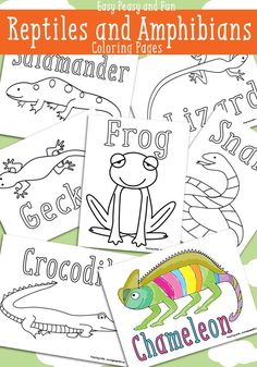 Reptiles and Amphibians Reptile Coloring Pages - Free Printable - Easy Peasy and Fun Reptiles Preschool, Les Reptiles, Reptiles And Amphibians, Preschool Activities, Sleepover Activities, Dinosaur Coloring Pages, Cool Coloring Pages, Animal Coloring Pages, Coloring Pages For Kids