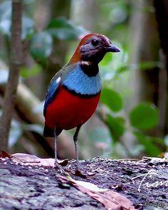 Birds 2, Cute Birds, Exotic Birds, Colorful Birds, Beautiful Birds, Beautiful Pictures, Bird Gif, Australia Animals, Cockatoo