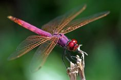 "Dragonfly-Prosperity, Good Luck, Strength, Peace, Harmony, Purity-Focus on living ""in"" the moment-& Definately the opening of my eyes to those around me, good and bad."