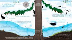 Talvella luonto on lepotilassa, mutta lumen alla on elämää. Forest Animals, Nature Animals, Biology For Kids, Media Literacy, Teaching Aids, Nature Journal, Elementary Science, Environmental Science, Nature Crafts
