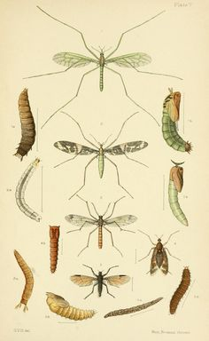 n164_w1150 | An elementary manual of New Zealand entomology;… | Flickr - Photo Sharing!