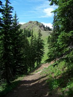 Wolf Creek Pass Scenic Drive, Colorado | ... Divide Trail (north of Lupo Scenic…