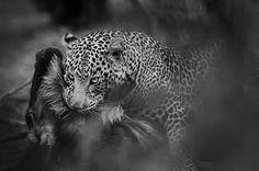 The power and beauty of nature in Maasai Mara National Reserve, Kenya ©Panos Laskarakis
