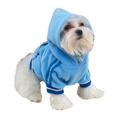 Casual CanineTM Sporty Fleece Pullover - Extra Small ** Don't get left behind, see this great dog product : Dog shirts