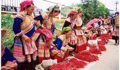 Ce circuit est destiné aux aventuriers qui désirent découvrir la beauté naturelle et le mode de vie des minorités ethniques des régions montagneuses du Nord du Vietnam.  http://welcomevietnamtours.net/tours/circuit-sapa-bac-ha-vu-linh-thac-ba-8-jours-565.html