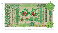 Beispiel für einen Bepflanzungsplan 100x200 cm