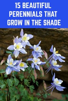 Just because an area of garden is in shade, doesn't mean it has to be boring. Here are 15 beautiful perennials to add beauty and color to your shady spots. Shade Perennials, Flowers Perennials, Planting Flowers, Shade Flowers Perennial, Best Flowers For Shade, Perrenial Flowers, Best Plants For Shade, Flower Gardening, Magic Garden