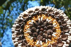 acorn mandala surprise for the birds and faires Autumn Crafts, Fall Crafts For Kids, Nature Crafts, Art For Kids, Art Nature, Acorn Crafts, Wreaths And Garlands, Nature Table, Environmental Art