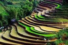 Sapa Vietnam. The only thing more beautiful than the rice fields in Sapa is the local people