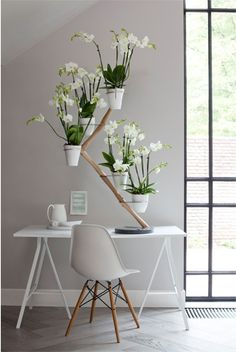 Orchidee in huis - Nieuws - ShowHome.nl
