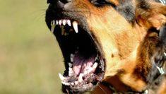 Kutyatámadás: súlyosan megsérült egy 5 éves kislány Dogs, Animals, Animales, Animaux, Pet Dogs, Doggies, Animal, Animais