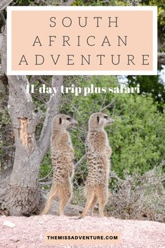 The MissAdventure inspires women to explore the globe together! Join our community of 000 amazing women and help us foster a culture of tolerance, learning and collaboration. Lions Head Cape Town, 1 Day Trip, Wildlife Safari, Rhinos, Game Reserve, Destin Beach, Africa Travel, Zebras, South Africa