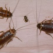 How to Get Rid of Roaches in the Kitchen | eHow