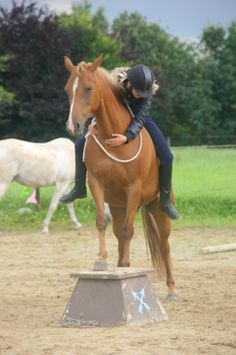 Horse agility pedestale-  I need to make one of these