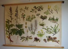 Vintage 40s Swedish Botanical Poster Educational Chart :: Would be really lovely in my home office