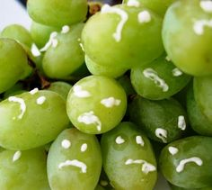 Grapes of Wrath - Seattle Edible Book Festival