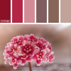 Color Palette: Maroon, Raspberry and Chocolate. If you like our color inspiration, sign up for our monthly trend letter - http://patternpod.us4.list-manage.com/subscribe?u=524b0f0b9b67105d05d0db16a&id=f8d394f1bb&utm_content=buffer847d9&utm_medium=social&utm_source=pinterest.com&utm_campaign=buffer