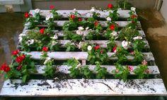 Rumkihn Crafts: Pallet Garden