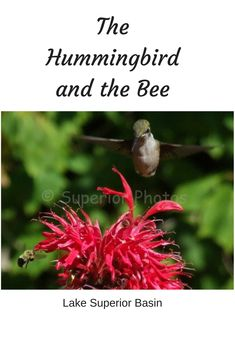 It's all about sharing. Hummingbird and bee sharing some beebalm. Homemade Hummingbird Food, Nectar Recipe, Hummingbird Swing, Meditation Prayer, Neuroplasticity, How To Attract Hummingbirds, Bee, Stress, How To Apply